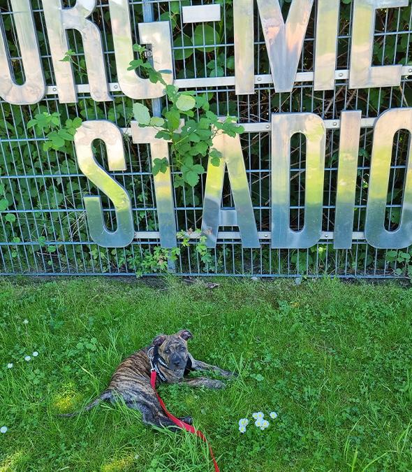 Tiermitgliedschaft – Rot-Weiss Essen